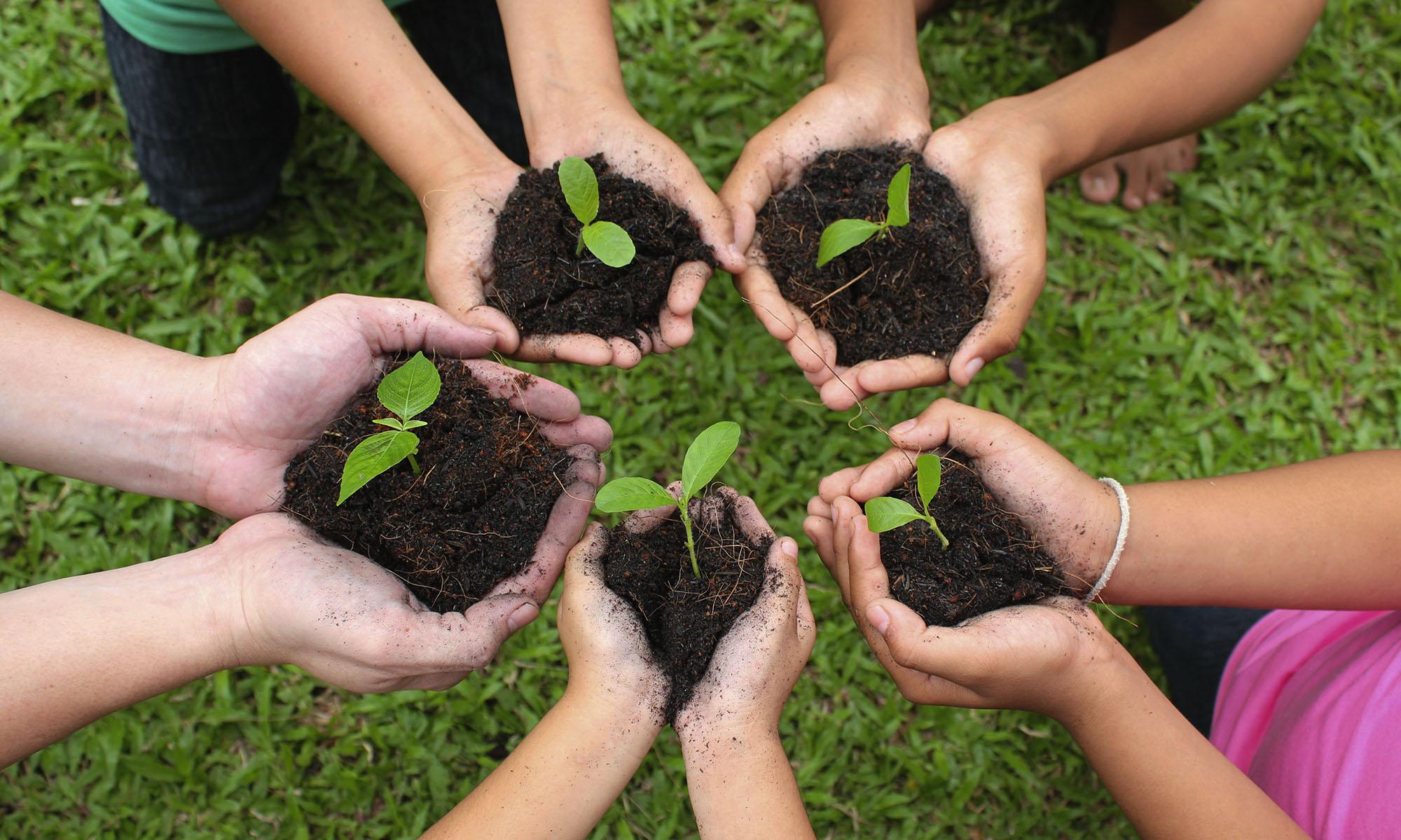 Children's hands holding seedlings